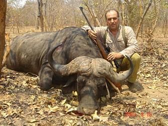Búfalo cazado en Namibia