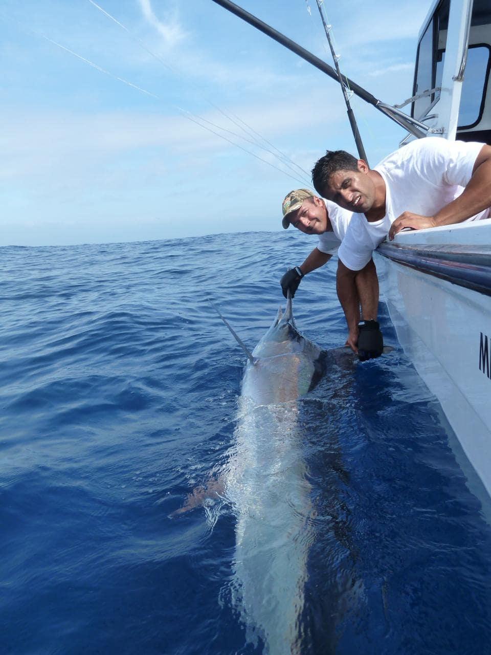 Pesca en Mozambique Marlin Azul, Negro y Rayado